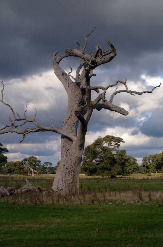 FF MTS DKD SCARY TREE