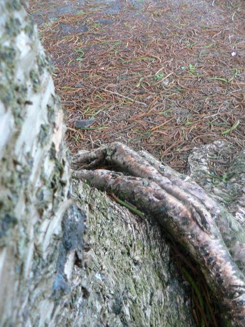 FF PF MTS dylan handy tree