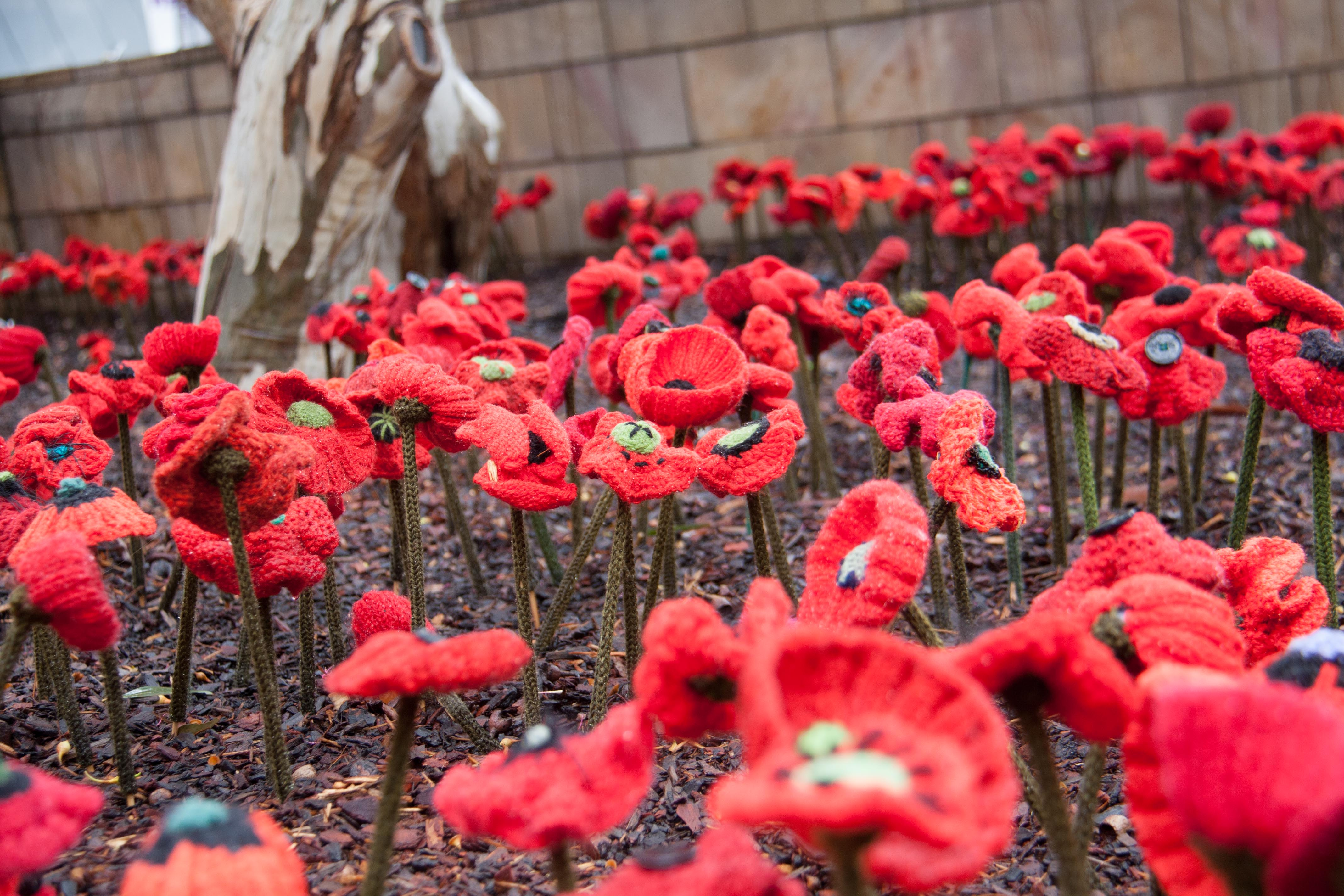 Misha Stands Tall In The Eye Of The Judge For Anzac Poppy Images