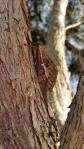 ff-fff516-sf moth1